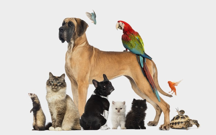find pet shop online
