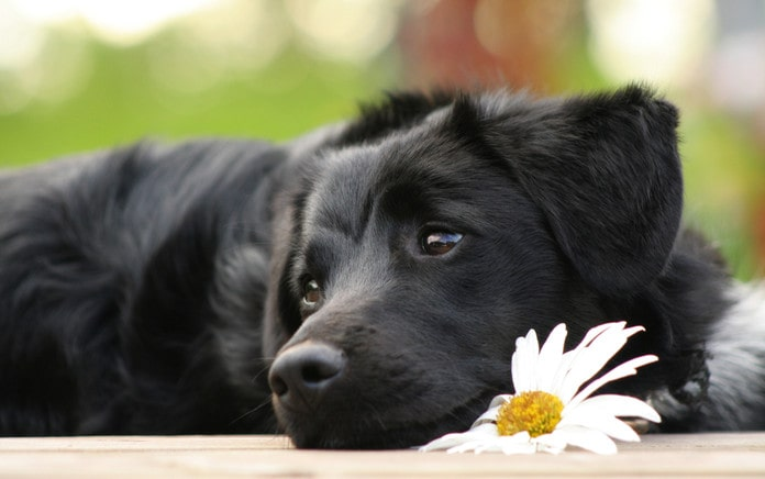 effects of castor oil on dogs