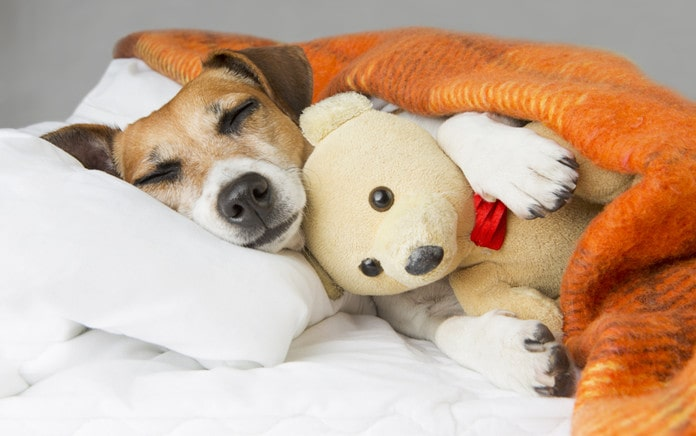 help pet sleep better