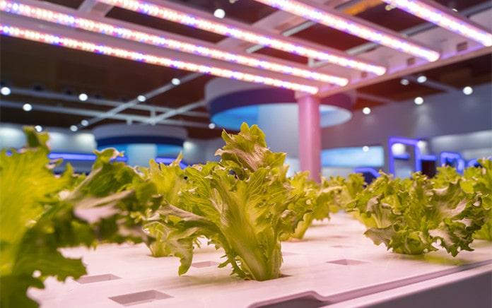 led grow lights in indoor gardening